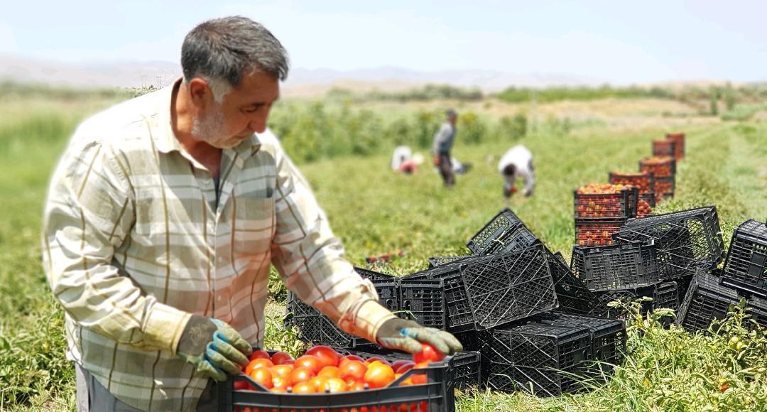 18 هزار شغل برکت در بخش کشاورزی کردستان